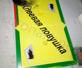 Клеевая ловушка от мышей и тараканов 31х21 см
